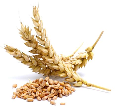does whole wheat have gluten how you eat your food can resolve your gluten intolerance