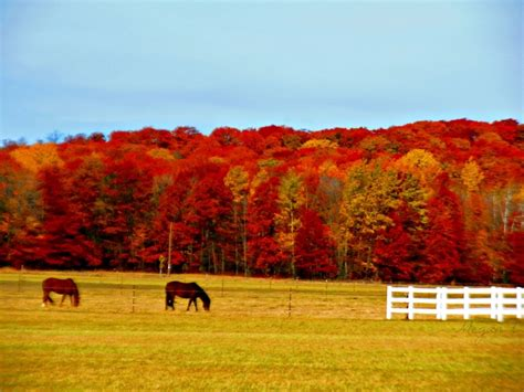25 best wisconsin s fall color images on