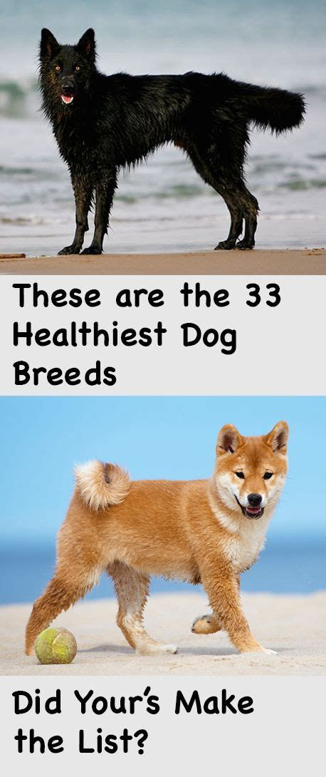 7 Health Conditions That Hit Dogs by 68 Best Images About Friends On Pets