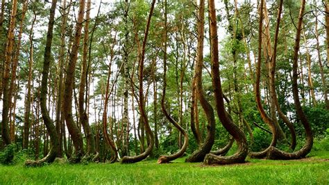 crooked forest poland 10 of the most beautiful forests in the world best