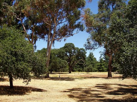 Stanford Also Search For Stanford Arboretum