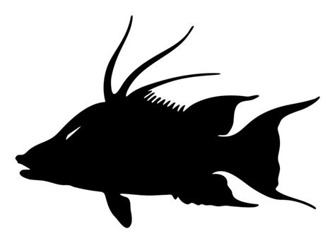 hogfish decal 10 quot x 7 quot