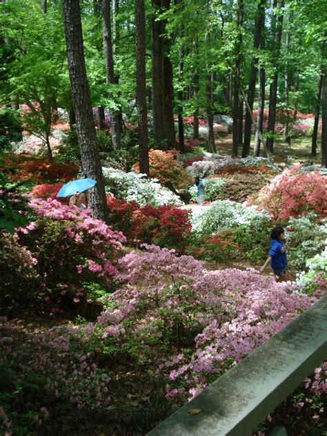 Callaway Gardens In by 1000 Images About Callaway Gardens Ga On