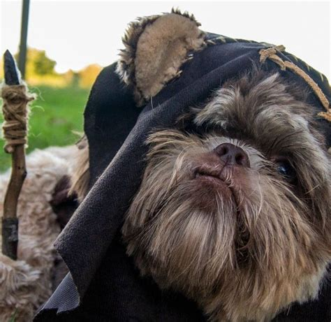 ewok puppy ewok those comedic animals
