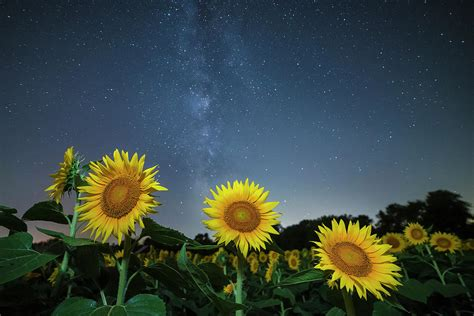 sunflower galaxy sunflower galaxy photograph by heffron