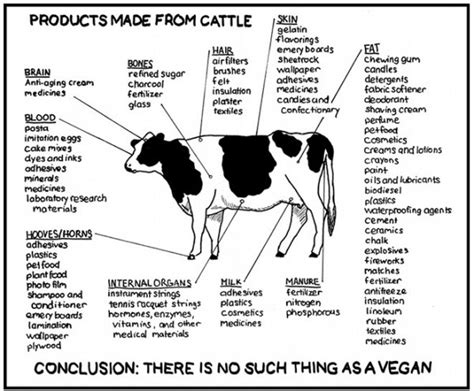 25 best ideas about parts of a cow on farm