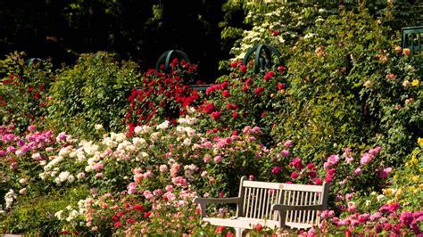 rose gardening english rose gardens www pixshark com images galleries