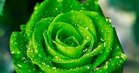 Bando Korea Green Flower flowers pretty beautiful lovely flowers everyday it s amazing green do you