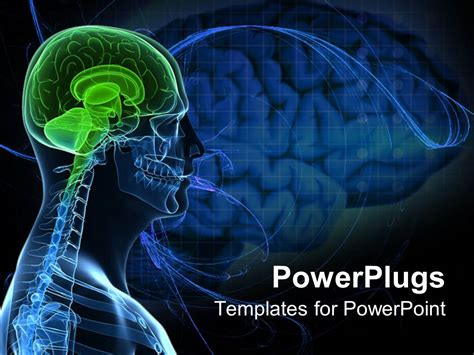 Powerpoint Template Anatomy Of A Healthy Brain Of The Human Body 16738 Brain Powerpoint Templates