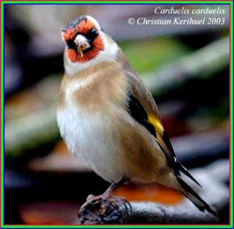 monde möbel le plus bel oiseau du monde cherchell ma ville bien