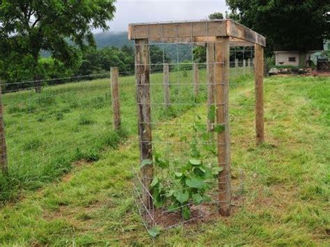 how to build an arbor trellis building a grape arbor