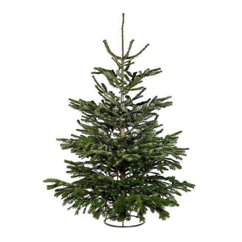 homebase real christmas trees for sale whole trees for best wallpapers cloud