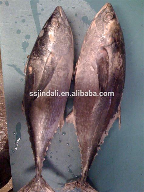 Ikan Deho Beku Tongkol Beku Ikan Beku Size 3 10 Pcs Kg saham baru ukuran besar seluruh putaran beku iqf ikan tuna sirip kuning ikan id produk