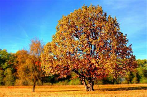 pr 233 parer l automne au jardin mobilier de jardin