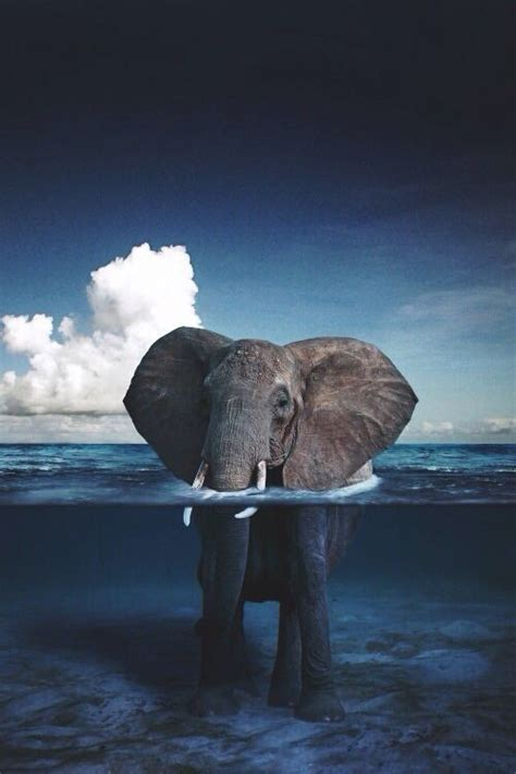 wallpaper iphone 6 elephant iphone 6 wallpaper tumblr hipster