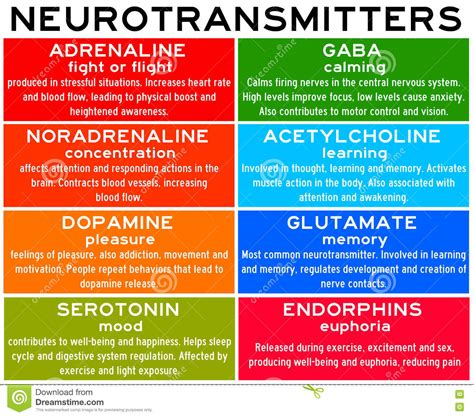 Neurotransmitters Also Search For Neurotransmitters Stock Photo Cartoondealer 73449996