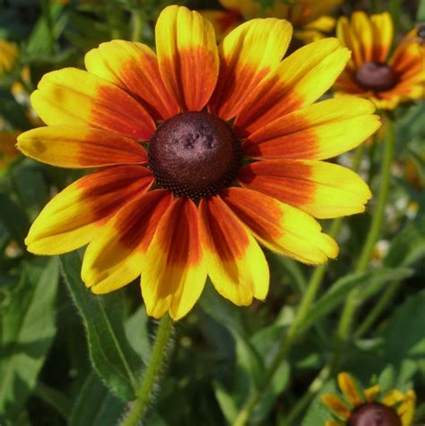 15 Benih Bunga Evening Primrose daftar nama bunga lengkap beserta gambar dan penjelasannya