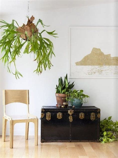 Apartment Therapy Air Plants 25 Best Ideas About Staghorn Fern On Staghorn