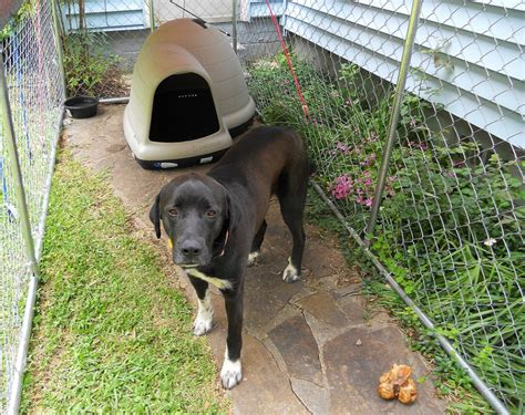 dog houses large breed best dog house for a large breed dog