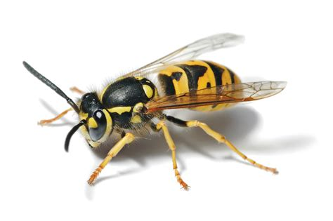 Upholstery Cleaning Victoria Pest Control For Wasps Certified Property Solutions