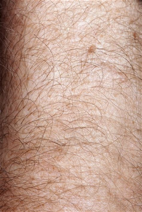 bed bugs in hair in the news hairy bodies repel bed bugs colonial pest