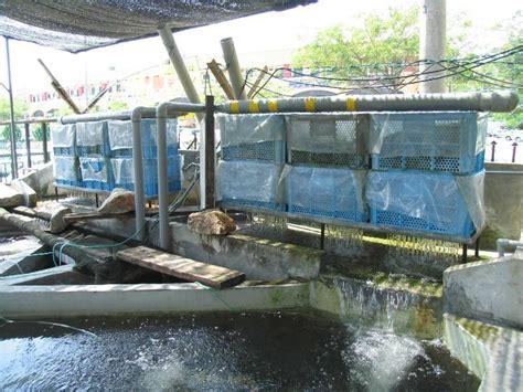 Pompa Aquarium Ginga for those who bakki shower filters koi fish stock