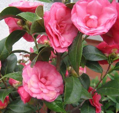 giardino di marzo la auberge il giardino di marzo