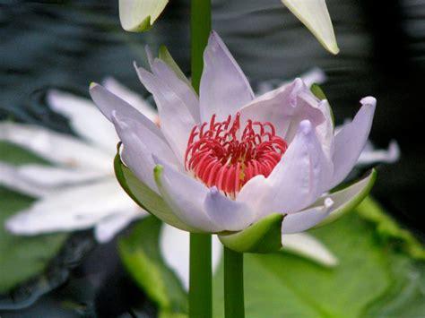 Royal Botanic Gardens Kew Kew Gardens Flowers