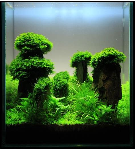 aquascape inspiration aquascaping inspirati sequa
