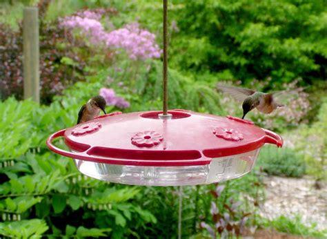rufous hummingbird selasphorus rufus wildlife journal