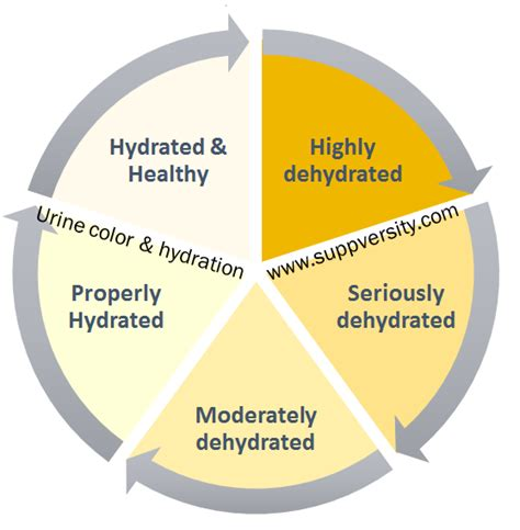 hydration and brain function202020201020303020102020200 02 hydrated or dumb dehydration affects brain and