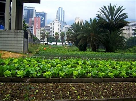 urban agriculture ensure  survival