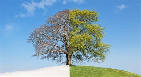 Buy Bookends a guide to autumn vs spring gardening love the garden