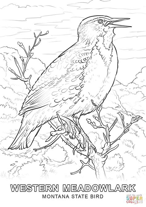 Montana State Bird Coloring Page montana state bird coloring page free printable coloring