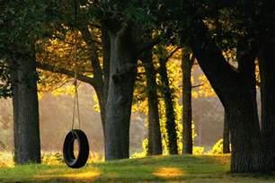 tire swing tree piedmont tree climbing ptc tree swing installation