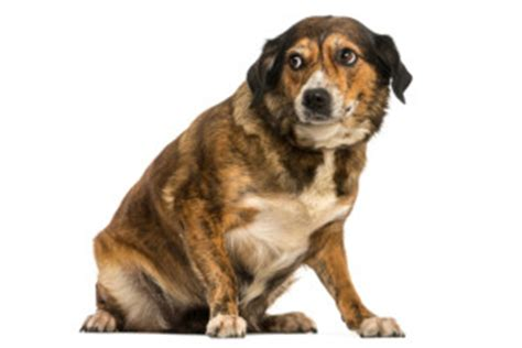 how to fearful dogs how to help your fearful iscp