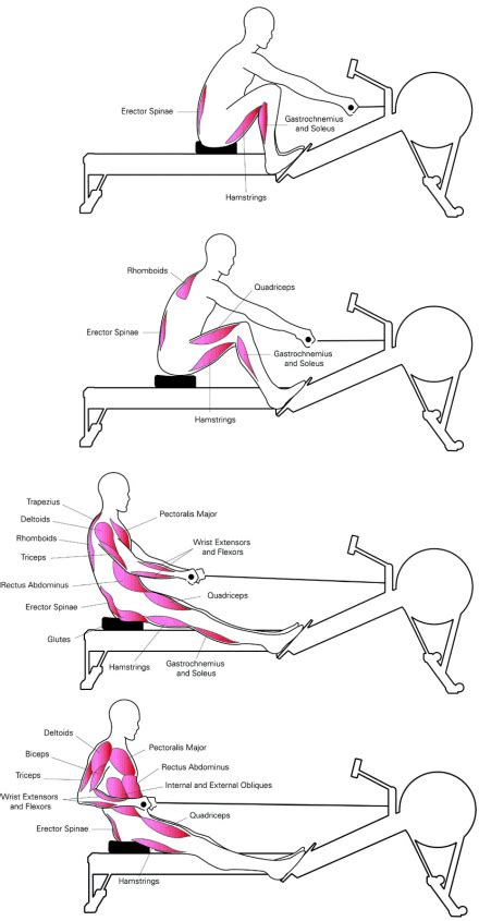 rowing machine diagram concept2 rowing machine technique workout review ezia