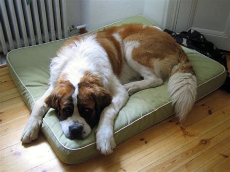 large pet beds large orthopedic dog bed pet dog breeds picture