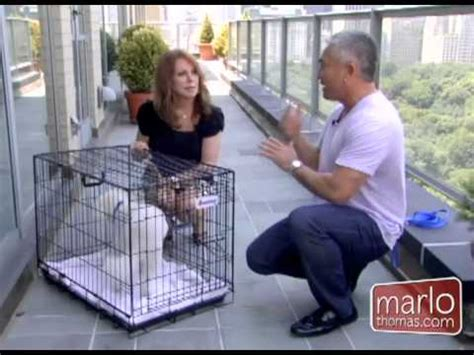 cesar millan how to your how to crate your for travel from cesar millan