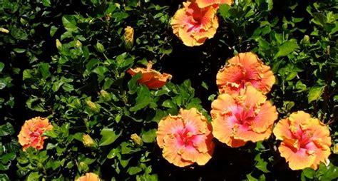 potatura piante da giardino piante da giardino piante da giardino