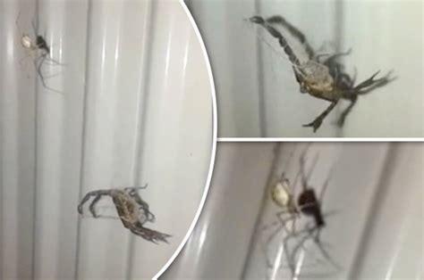 giant spider in bathroom giant spider in bathroom 28 images big spider bathroom