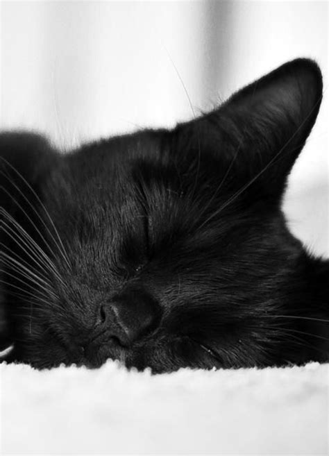 Black cat sleeping... | Cute animals, Cats, Pretty cats