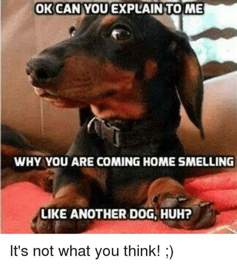 25 best memes about home home memes