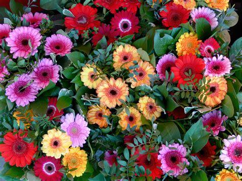 blumen pflanzen wochenmarkt m 252 nster - Blumen Und Pflanzen