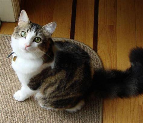 tweezer bay area cat rescue