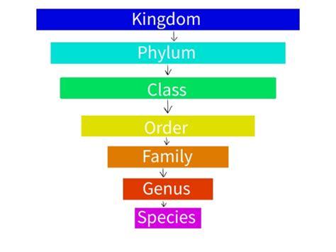 by carolus linnaeus classification carolus linnaeus the binomial nomenclature enigma