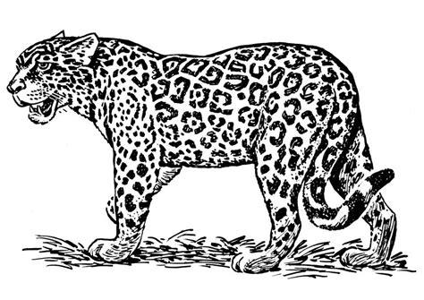 imagenes de jaguar para descargar dibujo para colorear jaguar img 16636