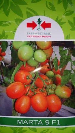 Bibitbenih Tomat Murah lmga agro jual produk pertanian harga murah dan grosir benih tomat