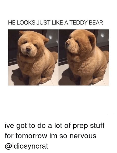 Bear Stuff Meme - funny prepping memes of 2017 on sizzle without