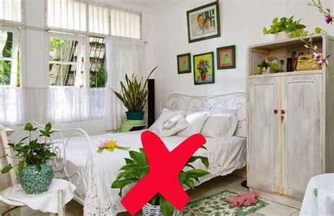 jenis tanaman  tepat  kamar tidurmediatani